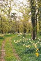 foret-printemps modif